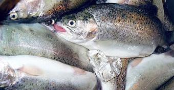 Bartosz Lisek radzi: Gdzie kupić na Mazurach świeże ryby?